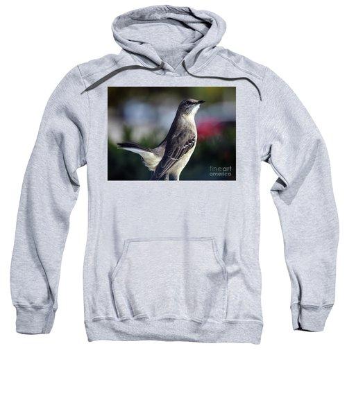 Northern Mockingbird Up Close Sweatshirt by William Tasker
