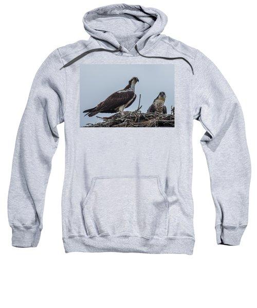 Osprey On A Nest Sweatshirt by Paul Freidlund