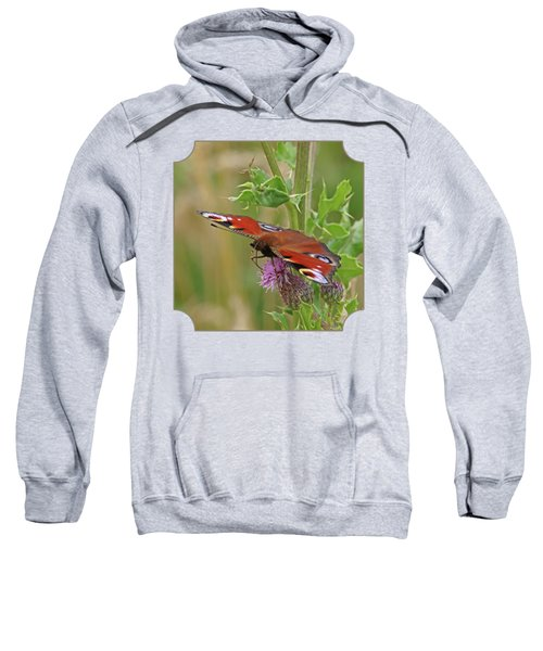 Peacock Butterfly On Thistle Square Sweatshirt by Gill Billington