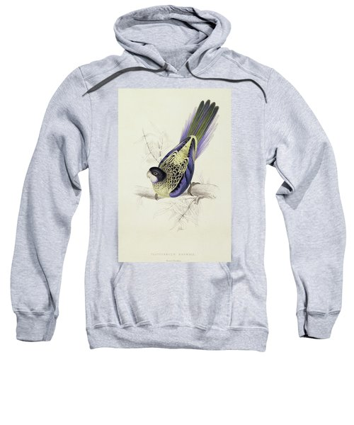 Platycercus Brownii, Or Browns Parakeet Sweatshirt by Edward Lear