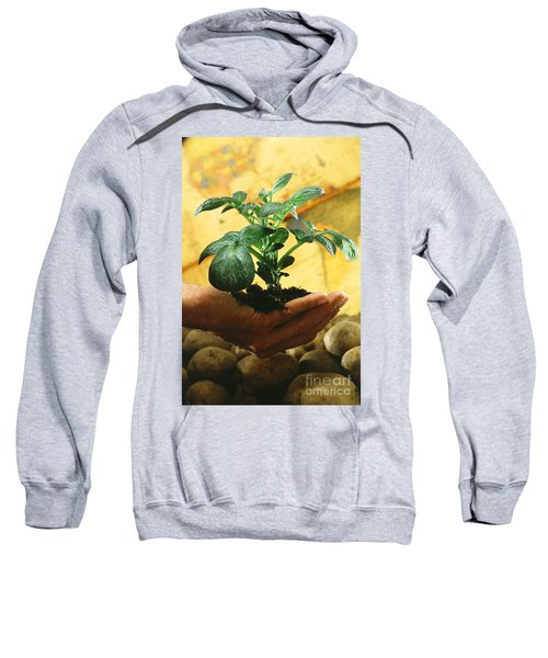Potato Plant Sweatshirt by Science Source