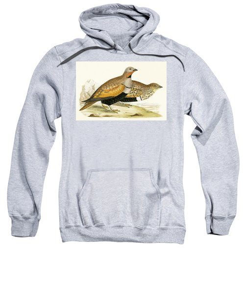 Sand Grouse Sweatshirt by English School