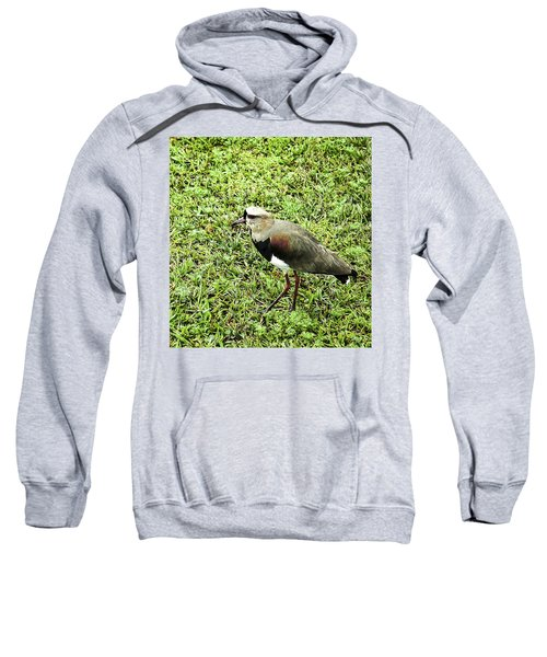 Southern Lapwing Sweatshirt by Norman Johnson