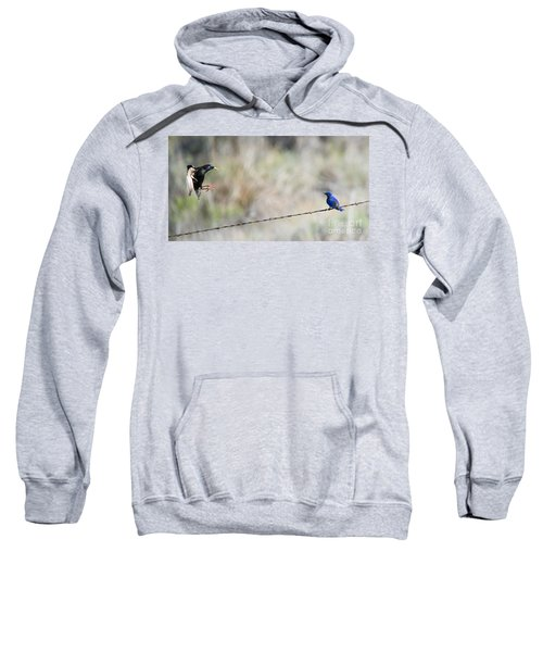 Starling Attack Sweatshirt by Mike Dawson
