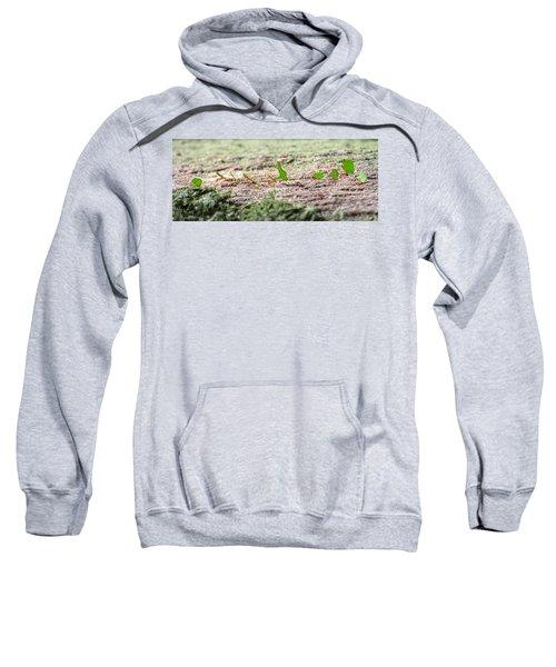 The Leaf Parade  Sweatshirt by Betsy Knapp