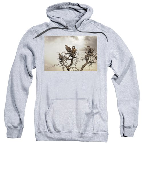 Vultures In A Dead Tree.  Sweatshirt by Jane Rix