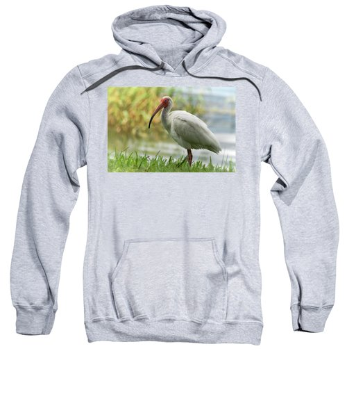 White Ibis On The Florida Shore  Sweatshirt by Saija Lehtonen