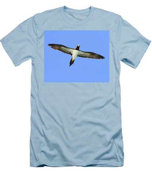 Brown Booby Men's T-Shirt (Slim Fit) by Tony Beck