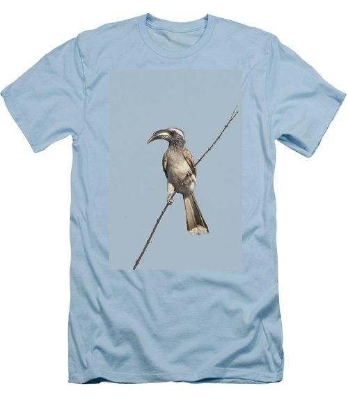 African Grey Hornbill Tockus Nasutus Men's T-Shirt (Slim Fit) by Panoramic Images