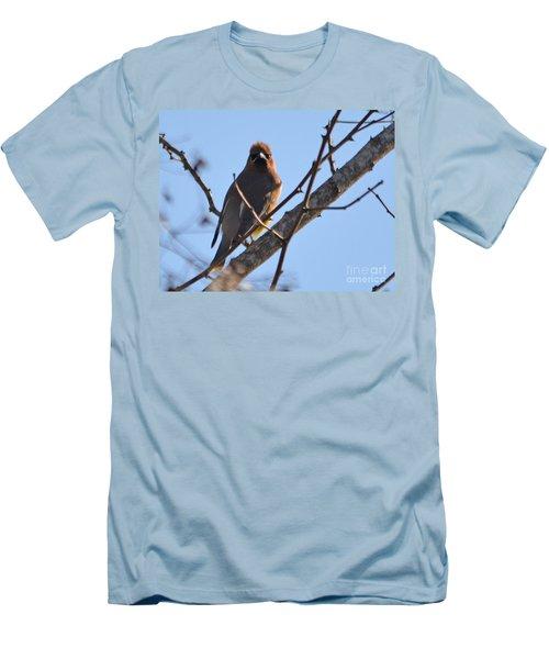 Cedar Wax Wing On The Lookout Men's T-Shirt (Slim Fit) by Barbara Dalton
