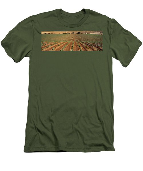 Agriculture - Sloping Field Of Early Men's T-Shirt (Slim Fit) by Timothy Hearsum