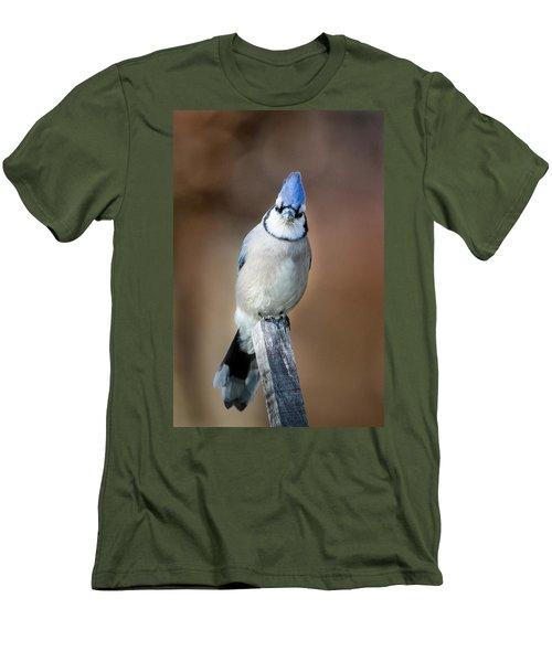 Backyard Birds Blue Jay Men's T-Shirt (Slim Fit) by Bill Wakeley