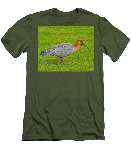 Black-faced Ibis Men's T-Shirt (Slim Fit) by Tony Beck