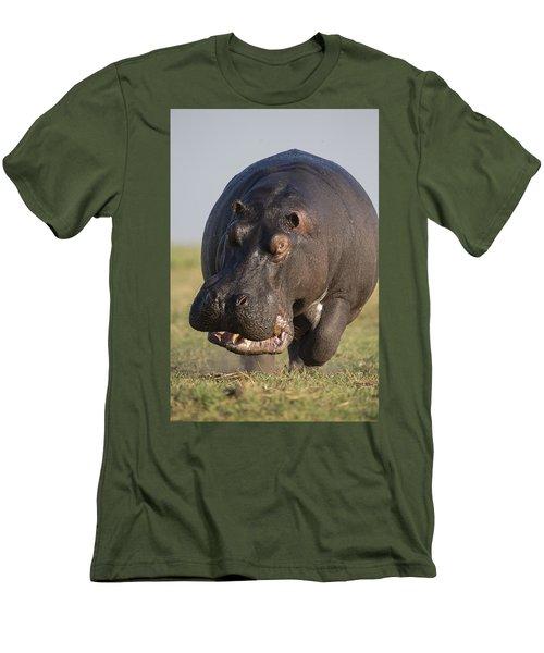 Hippopotamus Bull Charging Botswana Men's T-Shirt (Slim Fit) by Vincent Grafhorst
