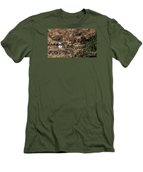 Killdeer Chick Men's T-Shirt (Slim Fit) by Skip Willits