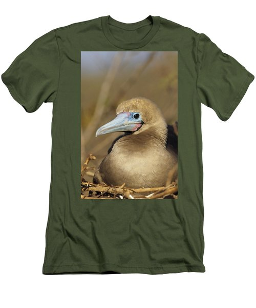Red-footed Booby Incubating Eggs Men's T-Shirt (Slim Fit) by Tui De Roy