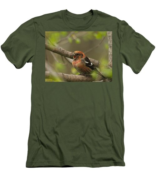 White-winged Crossbill Men's T-Shirt (Slim Fit) by James Peterson