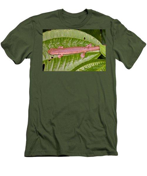 Bolitoglossine Salamander Men's T-Shirt (Slim Fit) by Dante Fenolio