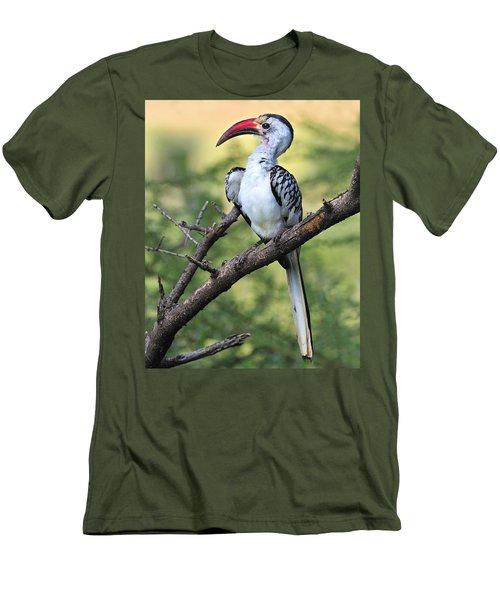 Red-billed Hornbill Men's T-Shirt (Slim Fit) by Tony Beck