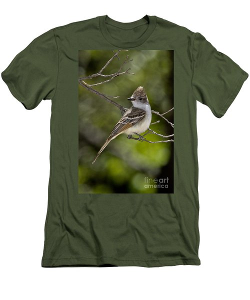 Ash-throated Flycatcher Men's T-Shirt (Slim Fit) by Anthony Mercieca