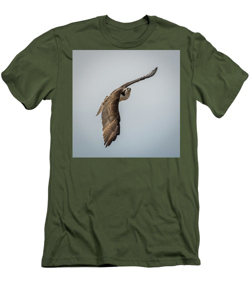 Osprey In Flight Men's T-Shirt (Slim Fit) by Paul Freidlund