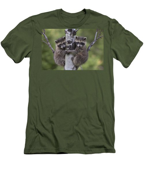 Raccoon Two Babies Climbing Tree North Men's T-Shirt (Slim Fit) by Tim Fitzharris