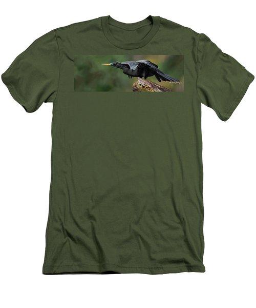 Anhinga Anhinga Anhinga, Costa Rica Men's T-Shirt (Slim Fit) by Panoramic Images