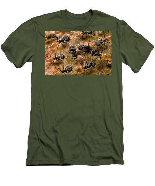 Ant Crematogaster Sp Group Men's T-Shirt (Slim Fit) by Mark Moffett