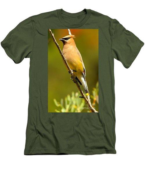 Cedar Waxwing Men's T-Shirt (Slim Fit) by Adam Jewell