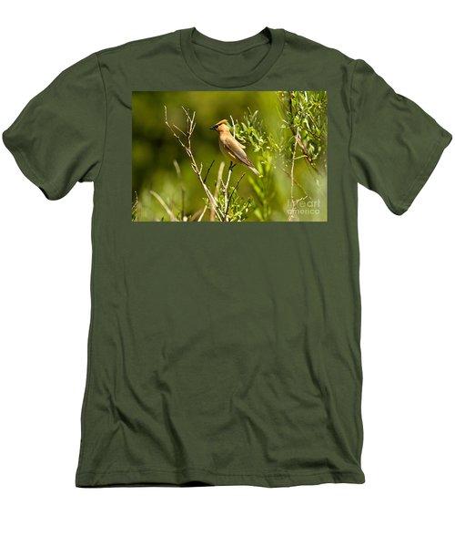 Cedar Waxwing At Glacier Men's T-Shirt (Slim Fit) by Adam Jewell