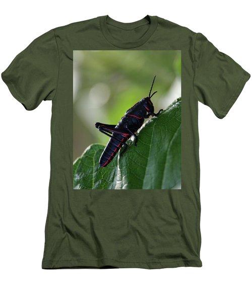 Eastern Lubber Grasshopper Men's T-Shirt (Slim Fit) by Richard Rizzo