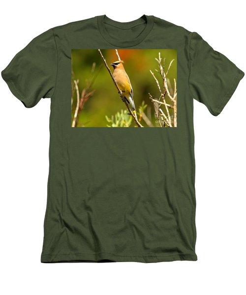 Glacier Cedar Waxwing Men's T-Shirt (Slim Fit) by Adam Jewell