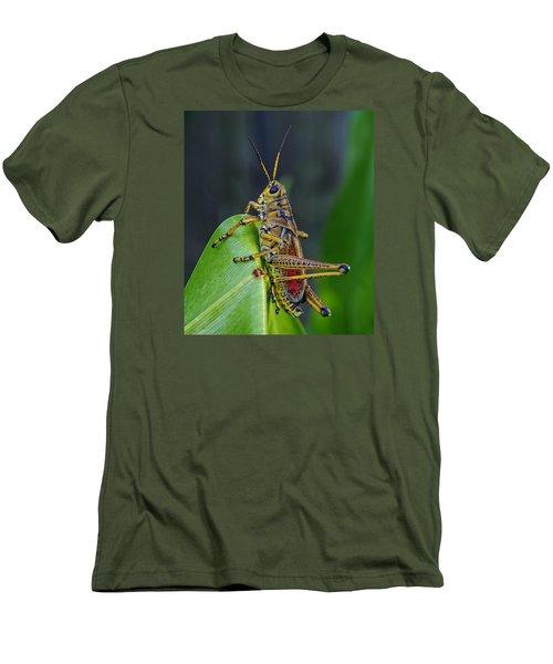 Lubber Grasshopper Men's T-Shirt (Slim Fit) by Richard Rizzo