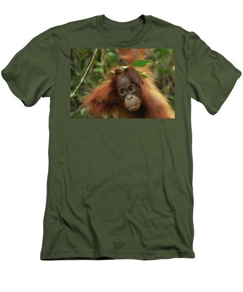 Orangutan Pongo Pygmaeus Baby, Camp Men's T-Shirt (Slim Fit) by Thomas Marent