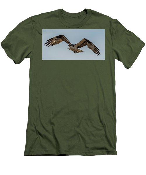 Osprey Flying Men's T-Shirt (Slim Fit) by Paul Freidlund