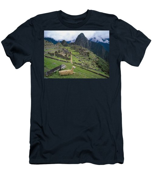 Llama At Machu Picchus Ancient Ruins Men's T-Shirt (Slim Fit) by Chris Caldicott