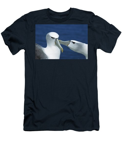 White-capped Albatrosses Courting Men's T-Shirt (Slim Fit) by Tui De Roy