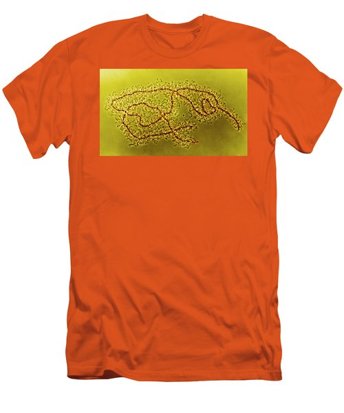 Lampbrush Chromosomes Newt, Lm Men's T-Shirt (Slim Fit) by Science Source