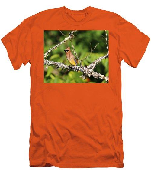 Cedar Waxwing  Men's T-Shirt (Slim Fit) by Carol R Montoya