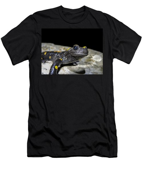 Fire Salamander Salamandra Salamandra Men's T-Shirt (Slim Fit) by Shay Levy