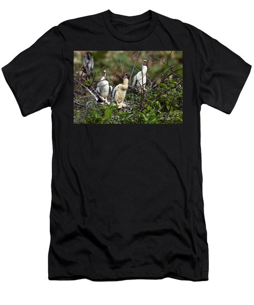 Baby Anhinga Men's T-Shirt (Slim Fit) by Mark Newman