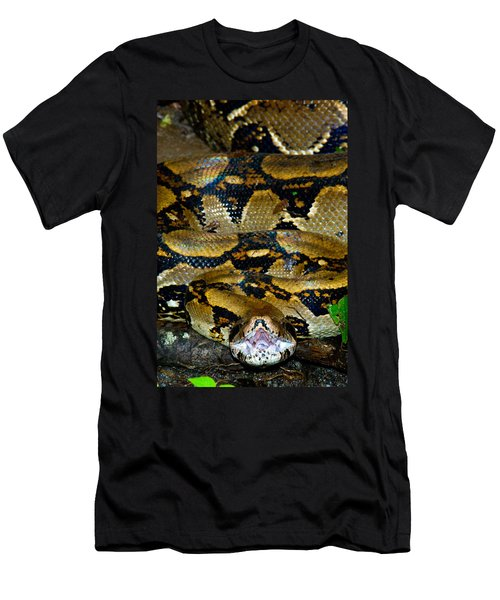 Close-up Of A Boa Constrictor, Arenal Men's T-Shirt (Slim Fit) by Panoramic Images