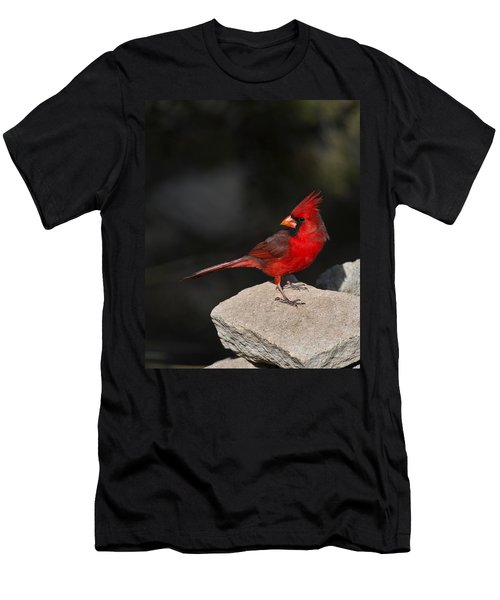 Male Cardinal Men's T-Shirt (Slim Fit) by Gary Langley