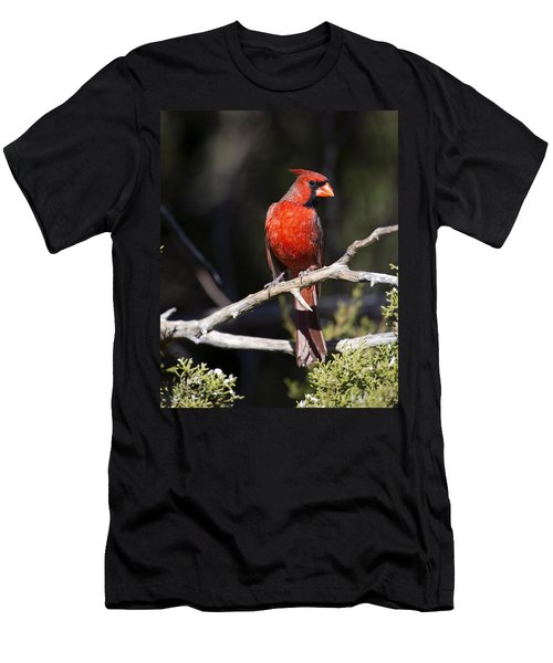Male Northern Cardinal Men's T-Shirt (Slim Fit) by Gary Langley