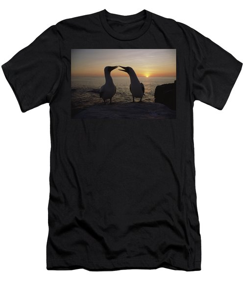 Masked Booby Couple Courting Galapagos Men's T-Shirt (Slim Fit) by Konrad Wothe