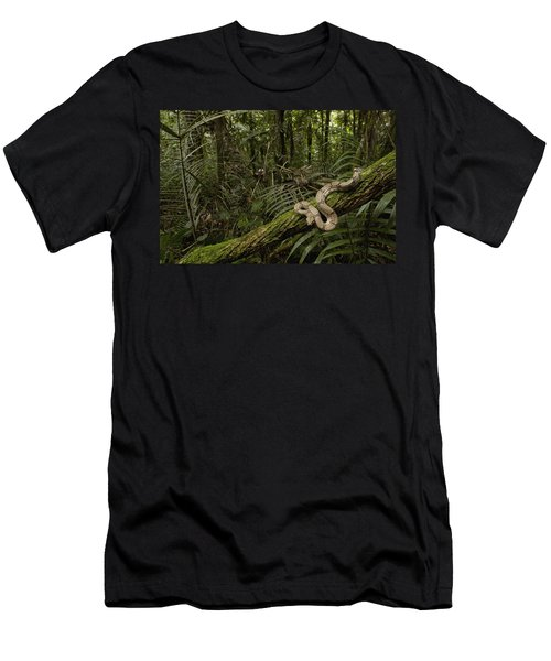 Boa Constrictor Boa Constrictor Coiled Men's T-Shirt (Slim Fit) by Pete Oxford