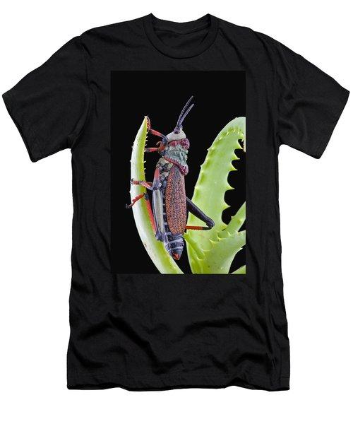Koppie Foam Grasshopper South Africa Men's T-Shirt (Slim Fit) by Piotr Naskrecki