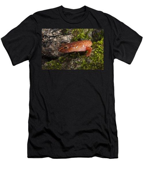 Northern Spring Salamander Gyrinophilus Men's T-Shirt (Slim Fit) by Pete Oxford