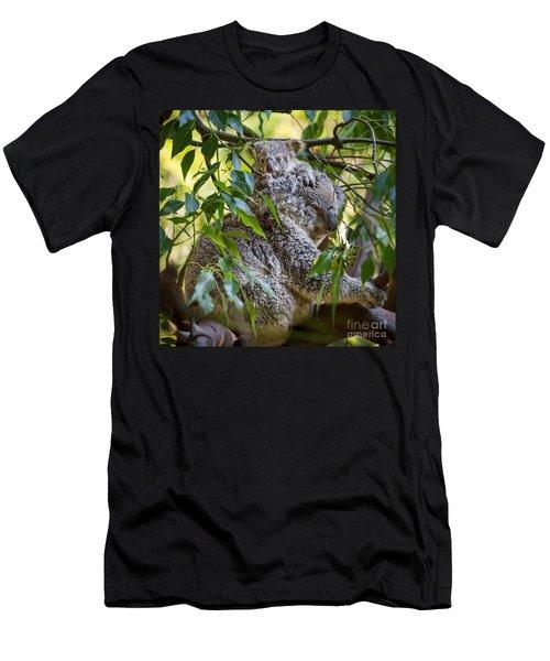 Koala Joey Men's T-Shirt (Slim Fit) by Jamie Pham