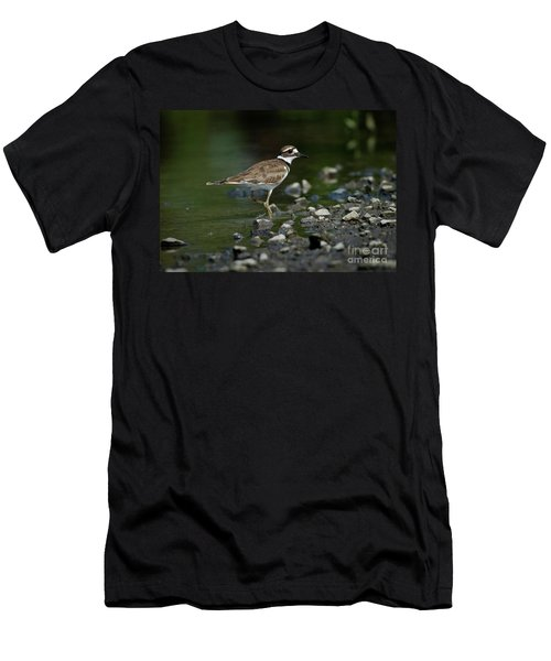 Killdeer  Men's T-Shirt (Slim Fit) by Douglas Stucky